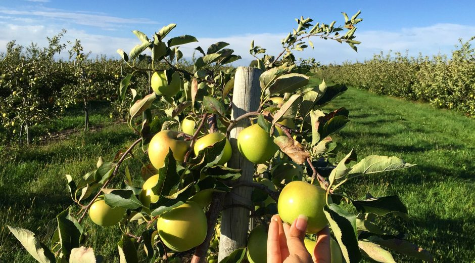 Thiessen Orchards, Essex County, culinary road trip, Ontario, Road Trip In Essex County