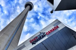 Ways To Experience Toronto Tourist Attractions Like A Local