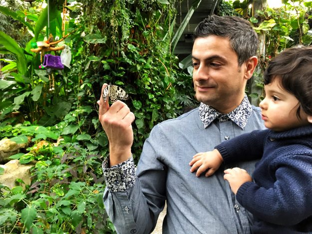 Cambridge Butterfly Conservatory, Celebrating The Holidays In Waterloo Region