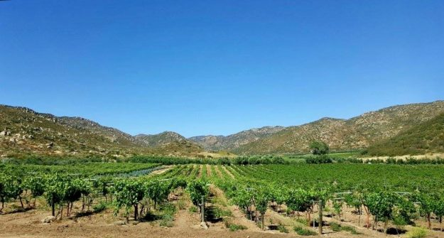 Valle De Guadalupe : Mexico's Amazing Wine Region