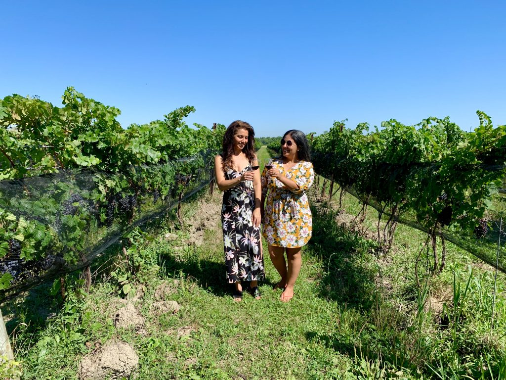 Muscedere Winery Essex County